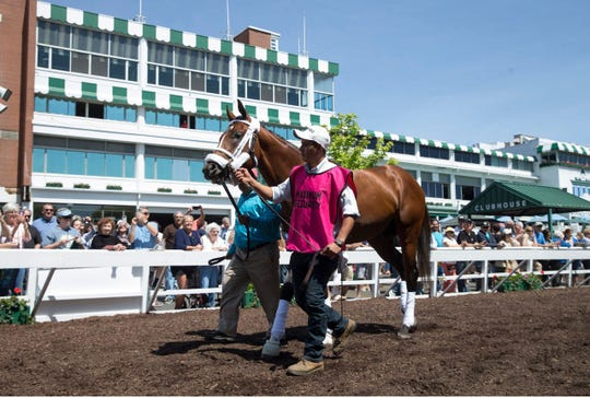 Maximum Security, shown schooling in the paddock at Monmouth Park on May 18, will have blood work done, trainer Jason Servis said Sunday.