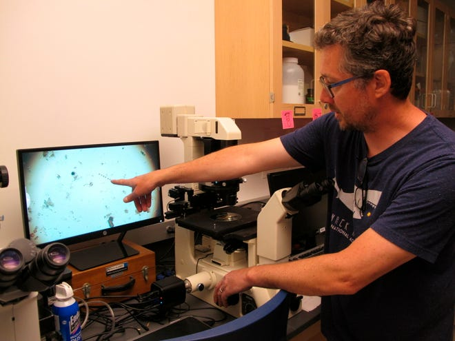 Jason Adolf, a professor at Monmouth University, points to a screen in West Long Branch, N.J. showing enlarged images of microscopic creatures found in a sample of ocean water on May 30.