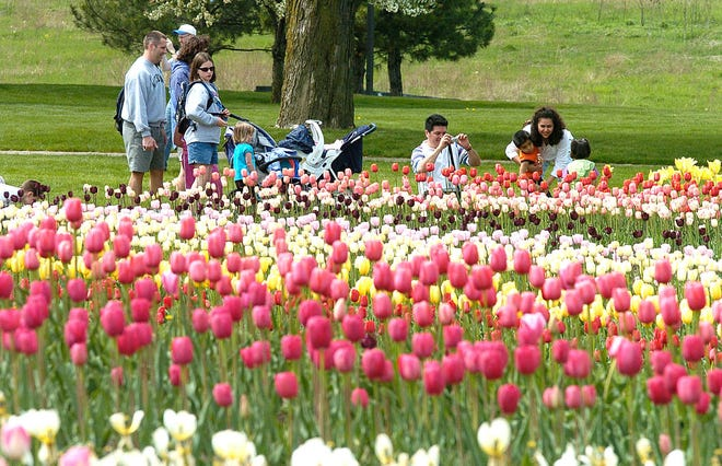 Holland, known for its annual tulip festival, is planning to construct a living mosaic book out of plants and flowers in a tribute to the L. Frank Baum novel and classic 1939 film, the Holland Sentinel reported.