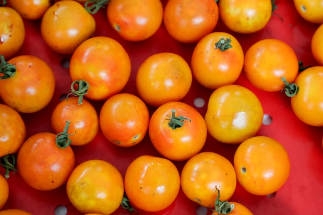 Fresh produce, tomatoes and more, were available for sale by vendors at the 2019 Tomato Feastival at Goodwood Museum and Gardens Sunday, June 9, 2019.