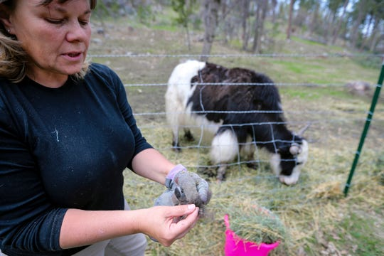 In a May 30, 2019 photo, Julie Smoragiewicz shows the fibre plucked from a yak at Yak Ridge Cabins and Farmstead near Cosmos Mystery Area in Rapid City.