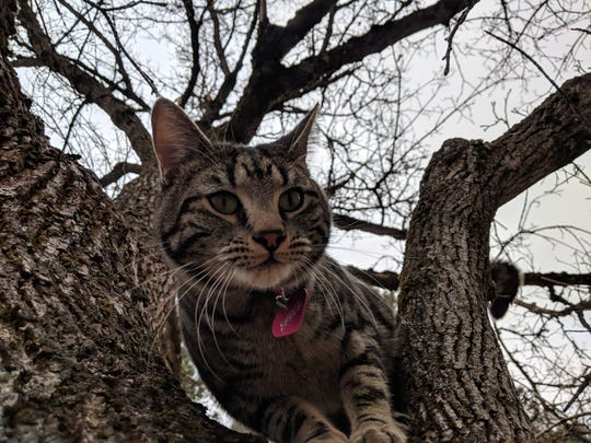 Our furry buddy Tree Cat in Spokane, Wash. We encountered him on every walk through town, and he tried to follow us home.