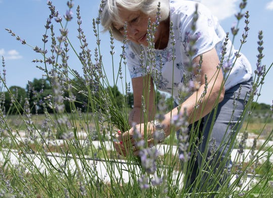 Joyce Eddy, from Summerville, picks lavender at Twin Creeks farm during U Pick Saturday, June 1, 2019.