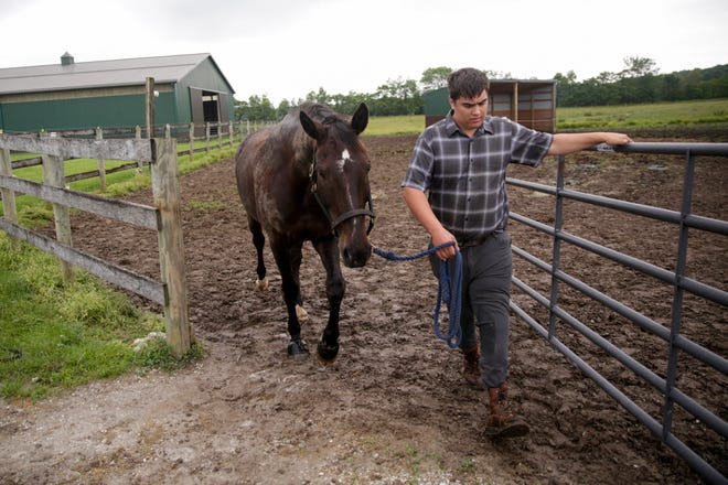 Peter Morrison walks his horse Dylan out of the fields, Monday, June 10, 2019, at Forrest Hill Farm & Kaiser Dressage in Lafayette.