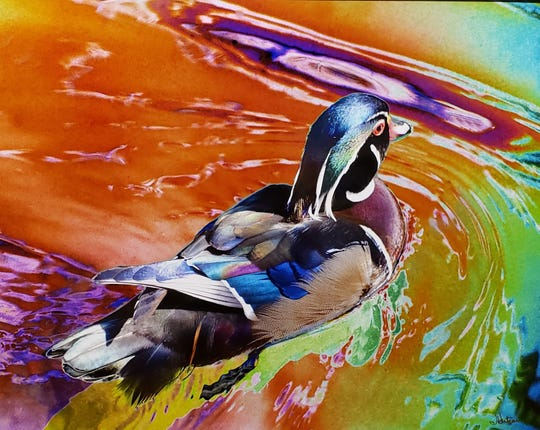 "Third: ""Wood Duck In Color"" by John Hutson."