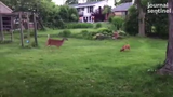 A dog and a deer were captured on video together in a Wauwatosa backyard.