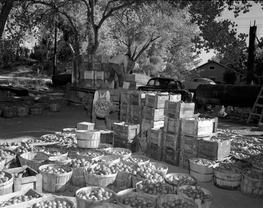 Workers unload apples from a truck at the Lawson Cannery in Aztec in this photo, circa 1948.