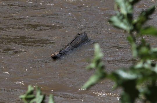Debris floats down the Animas River, Monday, June 10, 2019, in Boyd Park in Farmington.