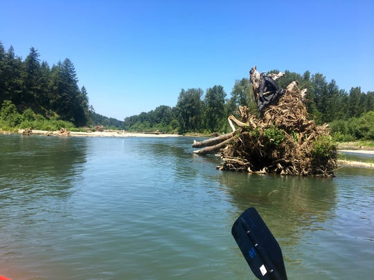 The float on the North Santiam River from Greens Bridge to Jefferson offers views of some large downed trees.