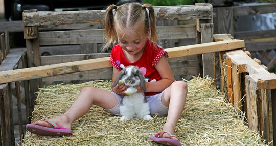 In this Thursday, June 6, 2019, photo, Victory Schofield plays with a rabbit at her home, in Ogden, Utah. When doctors said her youngest child would be a girl, Amie Schofield chose the name Victoria. Then the prediction changed to boy, so she switched to Victor. It turned out neither was exactly right: The blue-eyed baby was intersex, with both male and female traits. She and her husband decided to call the infant Victory. (AP Photo/Rick Bowmer)