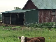 Pasture walks to highlight grazing amid challenging weather, building partnerships