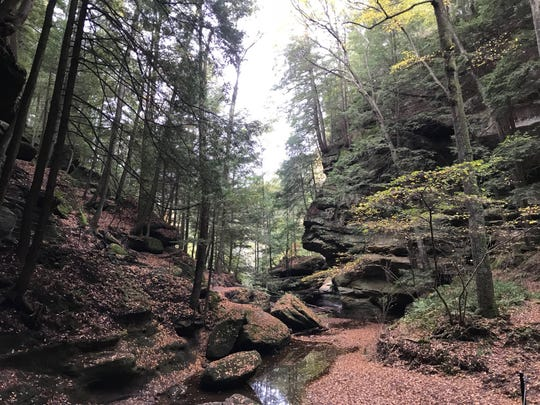 The Ohio Department of Natural Resources says a 44-year-old woman died after she was hit by a falling tree branch while visiting Hocking Hills State Park.