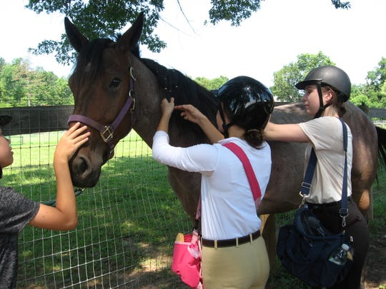 Non-riding Horse Care Workshops are scheduled year round at Lord Stirling Stable, 256 South Maple Ave.in the Basking Ridge section of Bernards.