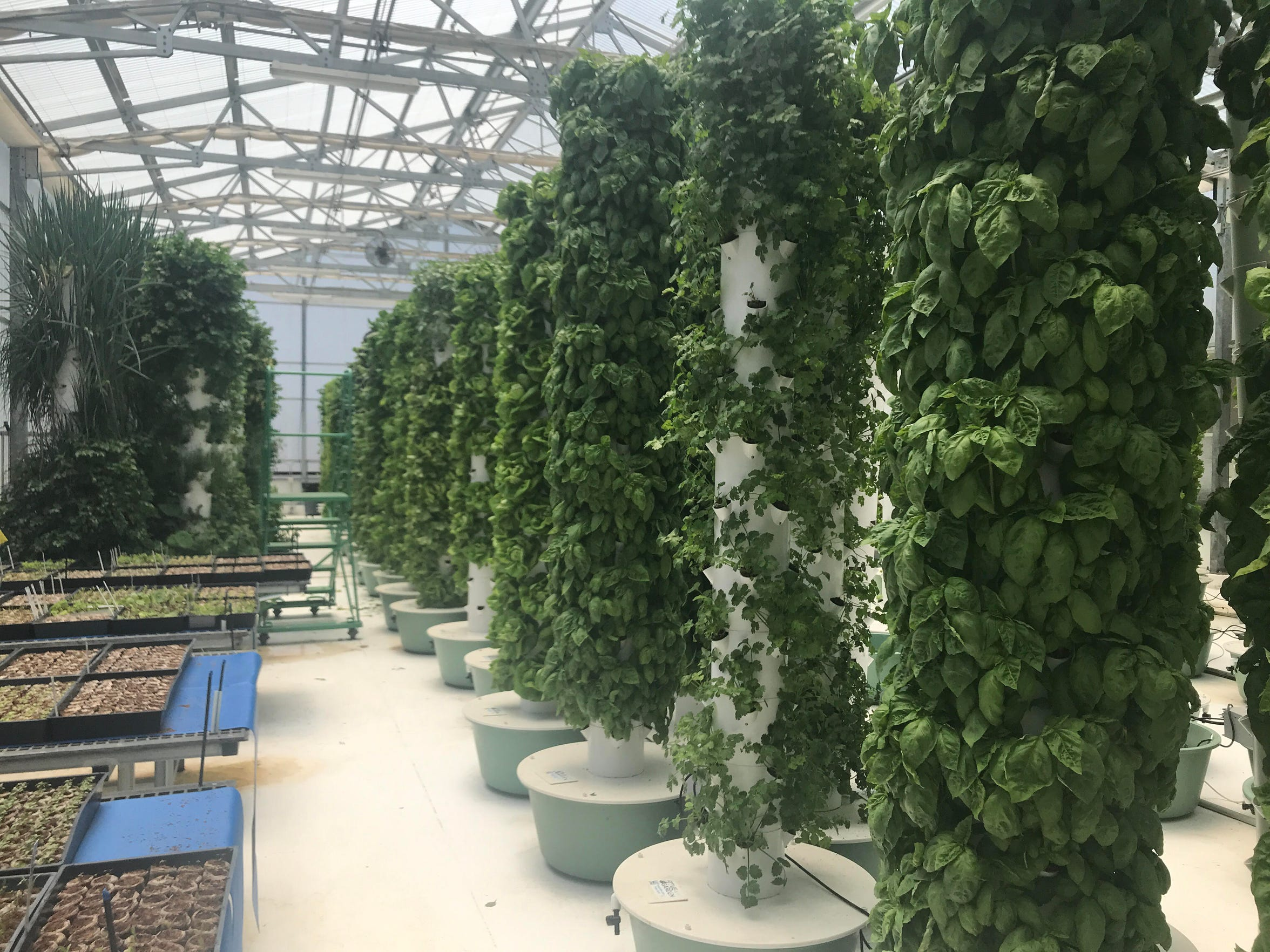 The vertical aeroponic farming system at True Garden in Mesa allows owner Troy Albright to grow an acre's worth of food on a tenth of the space.