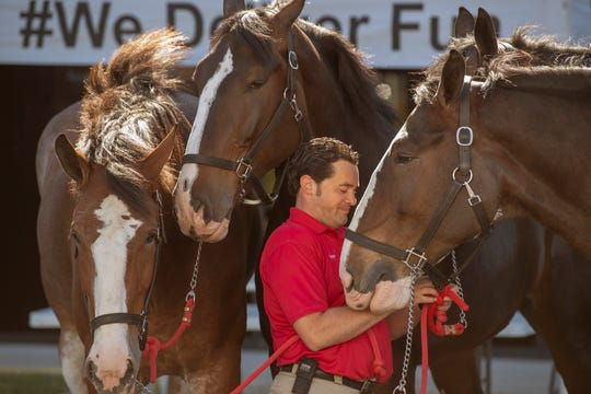 Grant Johnson, a Clydesdale handler, prepares the horses for their public viewing at Brewery Products in York. The horses will be available for public viewing until June 16.