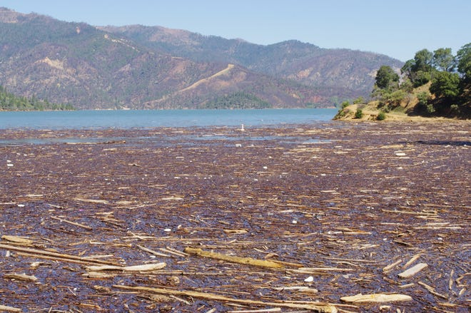 Forest Service officials said the debris on Lake Shasta is worse this year because the lake level is higher.