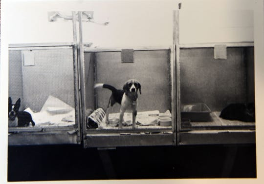 A historical photo inside a previous Sioux Falls Area Humane Society.