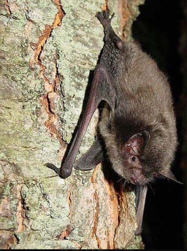 St Benedict Canceled On Account Of Bats