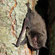 School at Evansville's St. Benedict canceled on account of bats