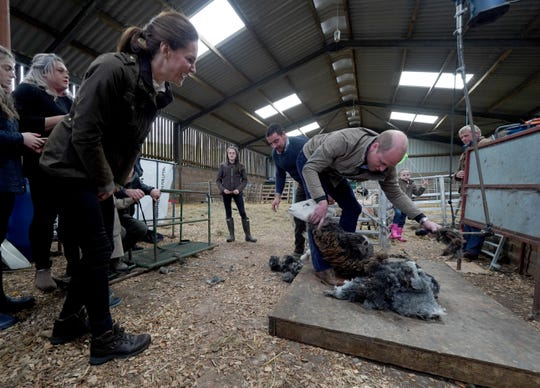 Duchess Kate looks on as Prince William tries shearing a sheep at Deepdale Hall Farm during their visit to Cumbria on June 11, 2019, in Patterdale, northwest England.