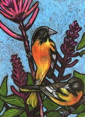 "O is for Oriole, from Jessalyn Beasley's book ""Little Birder: A Field Guide to Birds of the Alphabet."""