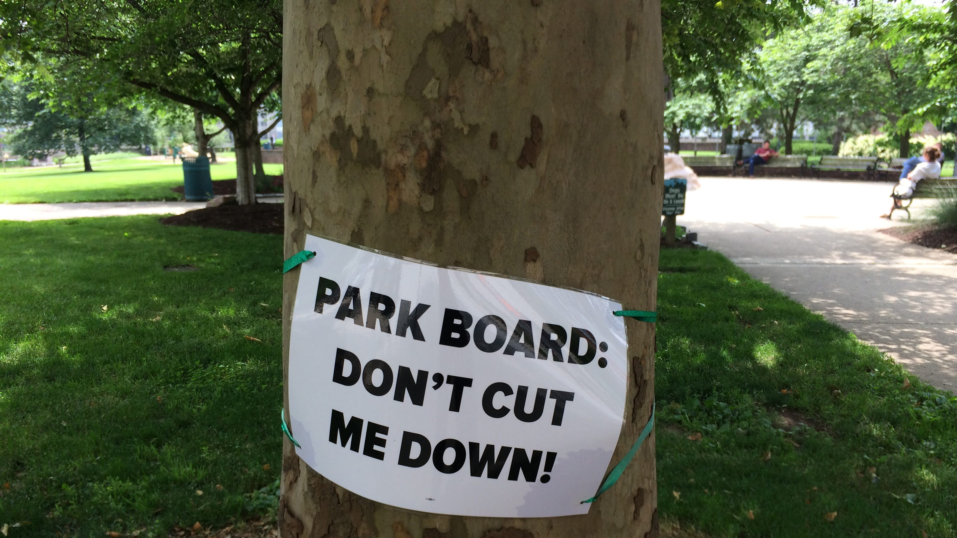 Opinion Don T Let One Tree Stop Lytle Park Redevelopment