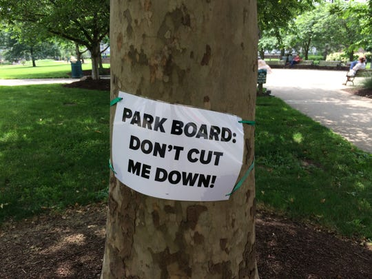 Kathleen Brinkman is leading the fight to save four 50-year-old London Plane trees located along Fourth Street in Lytle Park.
