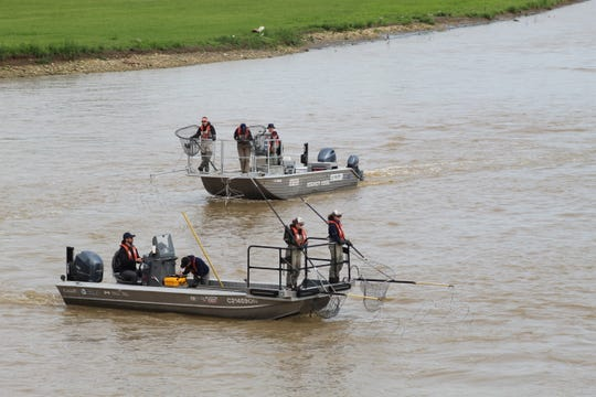 Research crews scour the Sandusky River searching for an invasive species, grass carp.
