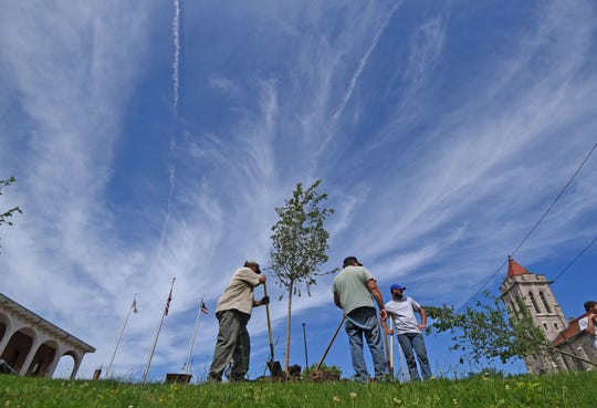 New trees were planted Wednesday on Richland County Courthouse lawn as part of beautification efforts.