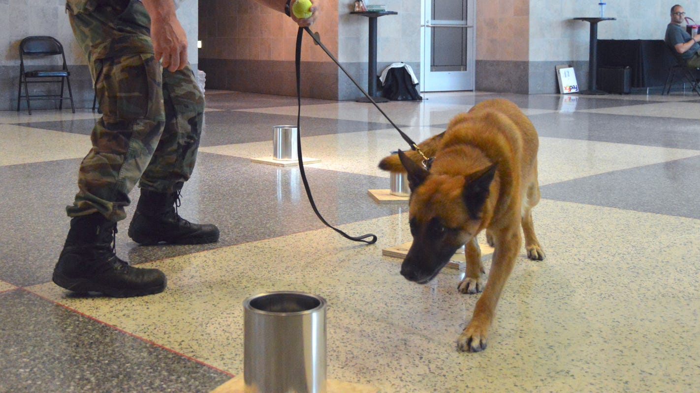 Canine teams from the Midwest are training in Wisconsin this week. Here are 9 things to know about explosive-sniffing K-9s