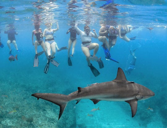 Northville native Molly Duda was one of 17 Coastal Carolina University students who earned an opportunity to swim with sharks off the coast of the Bahamas in May.