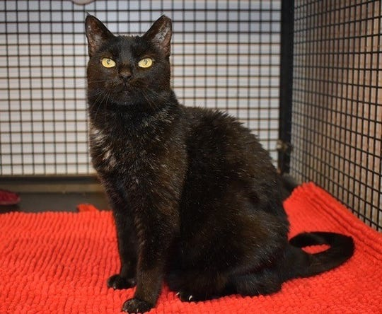 Licorice is available for adoption at 11129 Michigan Ave. in Youngtown. For more information, call 623-773-2246 after 10 a.m.