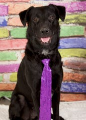Regal is available for adoption at 952 W. Melody Ave. in Gilbert. For more information, call 480-497-8296 or email FFLdogs@azfriends.org.