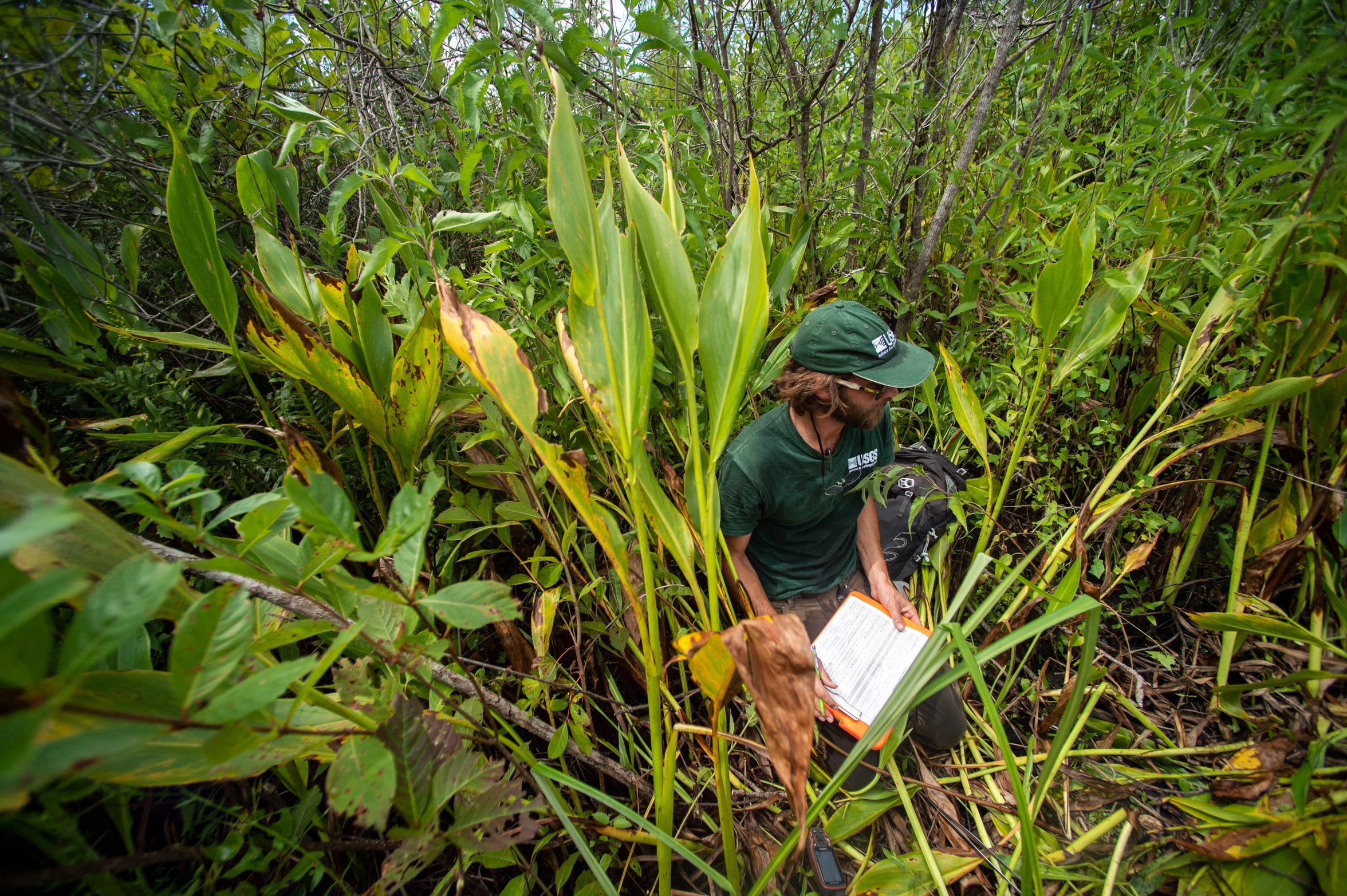 Austin Fitzgerald, biological science technician with the U.S. Geological Survey, documents data from field research conducted on Burmese python Charlie 5 on Thursday, June 6, 2019, at Big Cypress National Preserve.