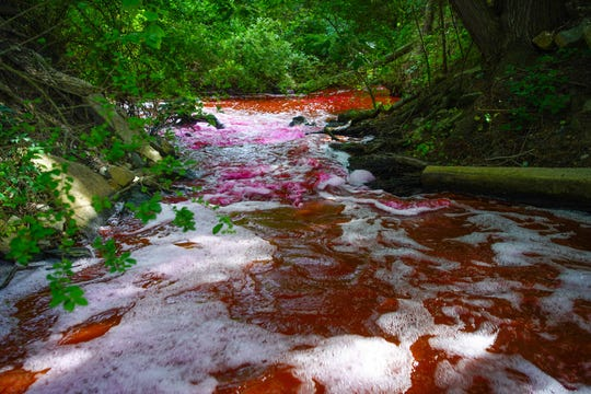 The Murderkill River was dyed Tuesday night into Wednesday morning for a test that aims to show where effluent flows from the Kent County Wastewater Treatment Plant into the Delaware Bay.