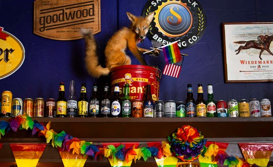 A taxidermy fox sits above the bar at the The Crazy Fox Saloon in Newport, Kentucky on Wednesday, June 12, 2019.