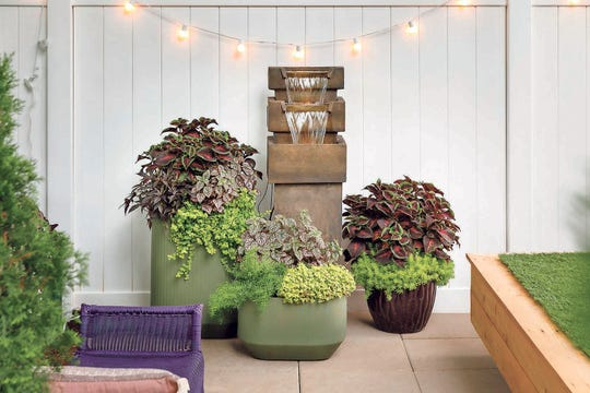 A mix of coleus, sweet potato vine, oxalis, sedum, polka dot plant, asparagus fern and creeping Jenny make a stunning container display.