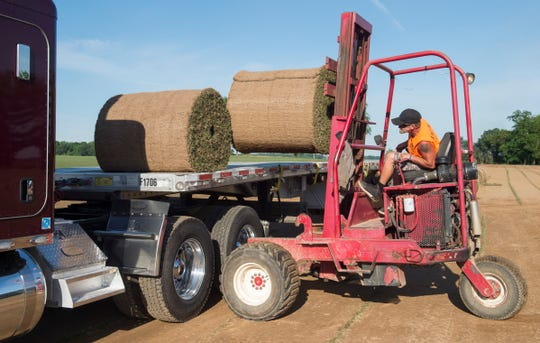 Danny Ellerbrook loads a semi with rolls of Northbridge sod to be shipped to the Cincinnati Bengals practice field at GrassMasters Sod Farm in Patoka, Ind. Tuesday, June 11, 2019.
