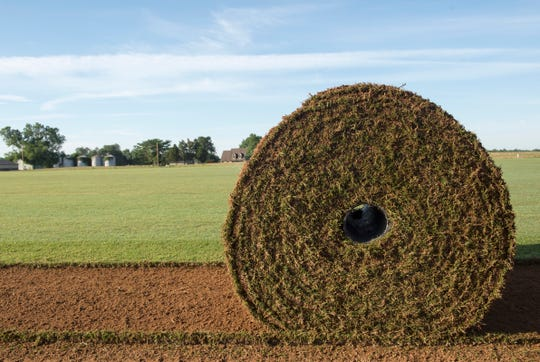 A roll of Northbridge sod sits in the field at GrassMasters Sod Farm in Patoka, Ind. Tuesday, June 11, 2019.