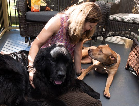 Fran Alexay Rizzo sits with her dogs Nico (left) and Luca Thursday, June 13, 2019. Rizzo is looking for the person who stopped and helped her and her dogs when she was walking them.