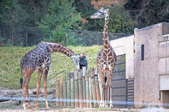 The first day of summer also happens to be World Giraffe Day at Greenville Zoo.
