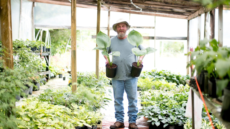 The Hosta Man Maynardville Man Has Propagated Named 10 New Varieties