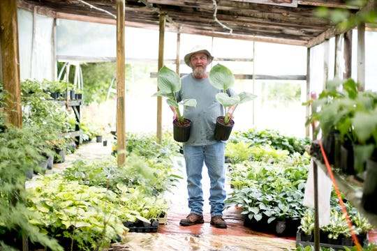 Brian White holds two of his hosta plants at his nursery in Maynardville, Tenn., on June 12, 2019. White grows a slew of rare hosta varieties and works as a consultant with the Knoxville Botanical Garden and Arboretum.