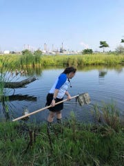Friends of the St. Clair River environmental educator Amy Meeker-Taylor searches for macroinvertebrates at an event at Wetlands County Park in 2018.