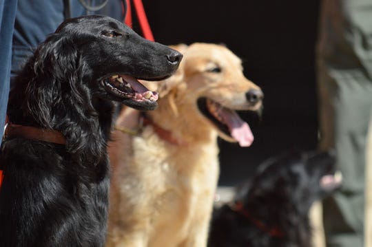 Shreveport Fire Department rescue dogs