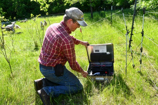 Colin King checks on a solar-powered electric fencing system Wednesday, June 12, at his farm near Long Prairie.