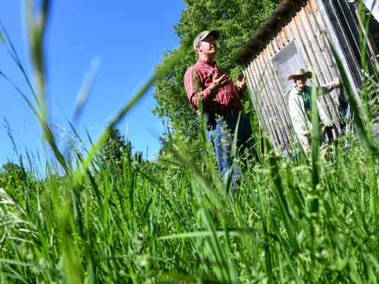 Colin King talks about farming methods with his father Tim that they practice on their land Wednesday, June 12, near Long Prairie.