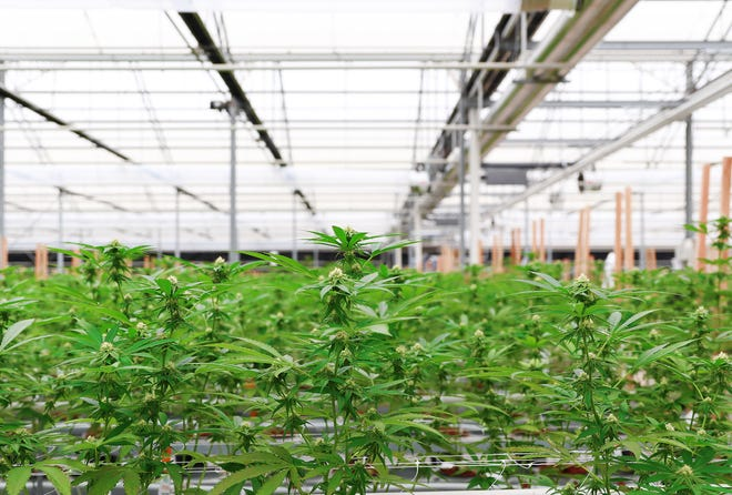 Greenbrier Holdings is set to open a 20,000 cannabis manufacturing plant in Parlier in October.