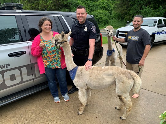 Green Oak Township residents Erin and Phillip Lowery, with police officer David Vasiloff, picturd with two alpacas Aphrodite and Athena. The alpacas ran off Thursday June 13, 2019 from their home near Rickett Road but were quickly located and returned to their owner, Jennifer Hansen.