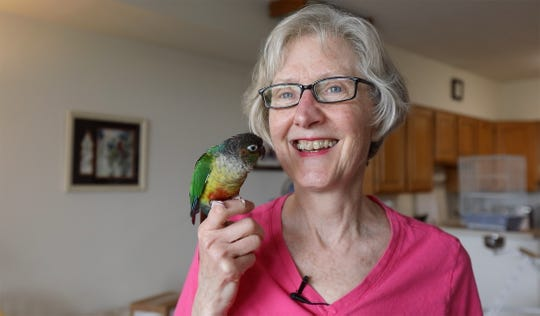Cindy Dudak, of Rochester, is reunited with her conure parrot, Missy, who flew out an open door April 2018.  She was reunited with her bird when a constuction worker, a mile from her apartment building, found her and brought her to Lollypop Farm last week.